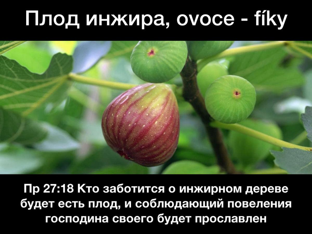 Притча о бесплодном инжире